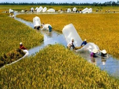 Trung Quốc cấm gạo tiểu ngạch: Việt Nam phải làm như Philippines!