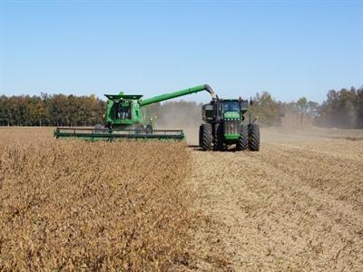 Giá đậu nành giảm khi mưa giúp nâng sản lượng mùa vụ Mỹ