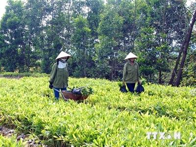 500.000 USD để phát triển rừng và trang trại tại Việt Nam