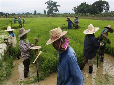 Thái Lan triển khai gói cho vay, giúp nông dân gặp khó