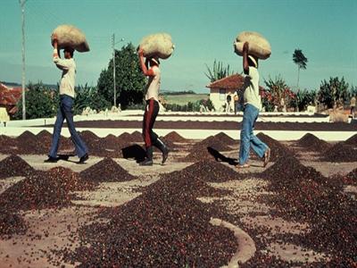 Giá cà phê Tây Nguyên tăng tiếp lên 39,8 – 40,7 triệu đồng/tấn