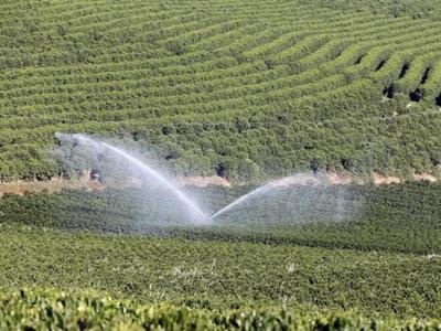 Nông dân cà phê Brazil ngại đầu tư mùa vụ mới thậm chí khi giá tăng