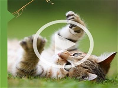Ngân hàng Nga cho thuê mèo để xông nhà mới