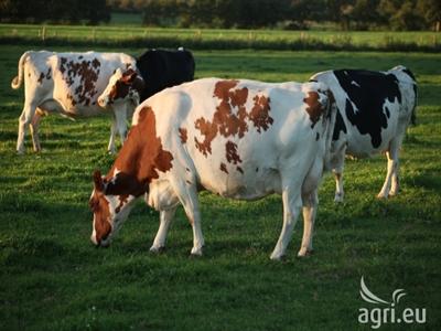 EU kêu gọi biện pháp hỗ trợ ngành sữa