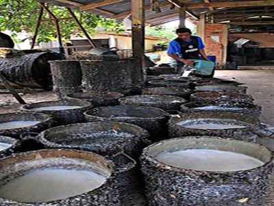 BAAC Thái Lan dành 15 tỷ baht hỗ trợ nông dân cao su