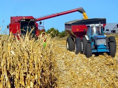 Giá ngô xuống thấp nhất 4 năm trước mùa vụ bội thu