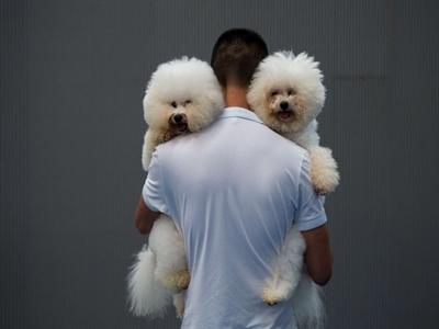 Thi hoa hậu chó ở Hàng Châu