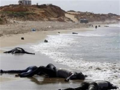 Chìm tàu ở Libya, gần 200 người thiệt mạng