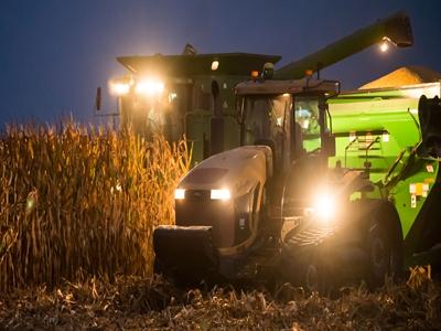 Giá lúa mỳ xuống thấp nhất kể từ 2010 trước viễn cảnh nguồn cung tăng