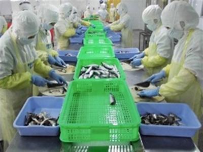 Doanh nghiệp điêu đứng vì công nhân bỏ thuốc chuột vào cá xuất sang Nhật