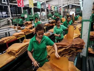 Thái Lan: Đảng Dân chủ thúc giục chính phủ hỗ trợ ngành cao su