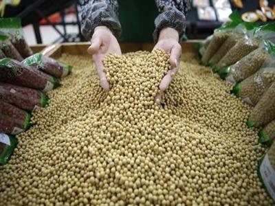 Trung Quốc tạm dừng cấp phép nhập khẩu đậu nành biến đổi gen