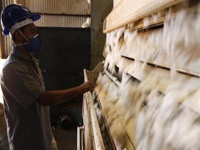 Mỹ, Brazil kết thúc tranh cãi về trợ giá ngành bông
