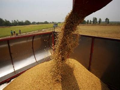 Thái Lan thay đổi chính sách nông nghiệp