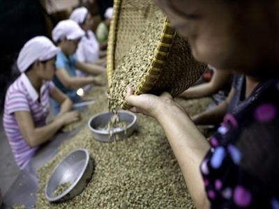 Giá cà phê Tây Nguyên không đổi ở 39,7-40,9 triệu đồng tấn