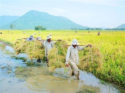 FAO: Xuất khẩu gạo của Việt Nam năm 2014 ước đạt 6,9 triệu tấn