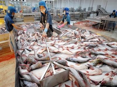 Phó Thủ tướng yêu cầu làm rõ tin về độc quyền xuất khẩu cá tra vào Nga