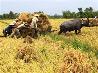 Sau 15 năm, FDI vào nông nghiệp giảm 30 lần