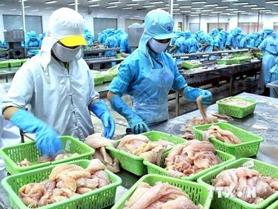Nga không thông quan 25 tấn cá tra đông lạnh của Hùng Vương