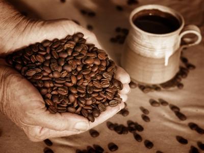 Giá cà phê Tây Nguyên quay đầu giảm xuống 40,7-41,9 triệu đồng tấn