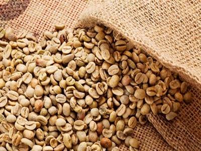 Giá cà phê Tây Nguyên tăng trở lại lên 41,3-42,4 triệu đồng tấn