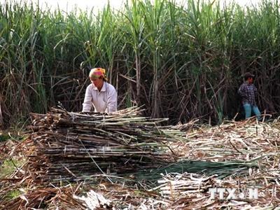 Định hướng dài hạn nhằm thu hút vốn FDI vào nông nghiệp