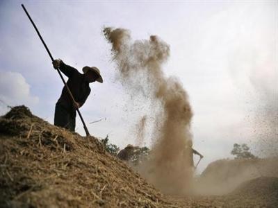 Trung Quốc tăng cường kiểm soát nhập khẩu ngũ cốc do tồn kho lớn