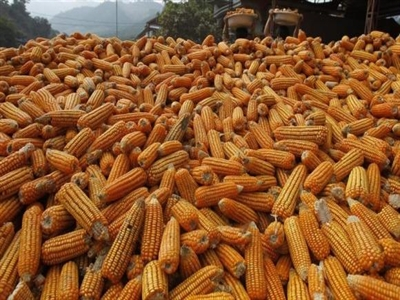 Reuters: Khách hàng tại Việt Nam hủy đơn hàng nhập khẩu ngô và đậu nành