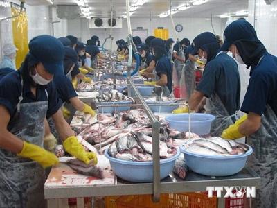 Sản lượng xuất khẩu cá tra của Việt Nam đang tăng trở lại