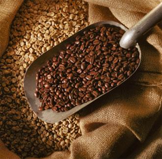 Giá cà phê Tây Nguyên tăng trở lại lên 39,2-40,2 triệu đồng tấn