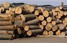 Cơ hội xuất khẩu của DN gỗ Việt Nam trong năm 2013
