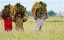 GDP ngành nông nghiệp xu hướng giảm
