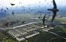 Phòng cúm A/H5N1 lây lan từ chim yến: Không ai làm như ta là diệt tất tần tật!