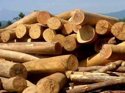 Ngừng tạm nhập, tái xuất gỗ từ Lào và Campuchia