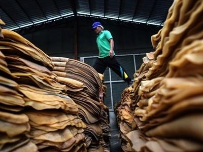 Thái Lan: Bắt đầu thanh toán tiền cho nông dân cao su vào 15/11