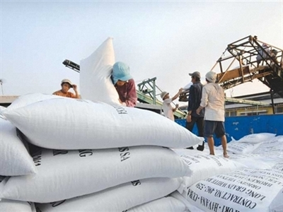 Xuất khẩu gạo ngày càng cạnh tranh khốc liệt