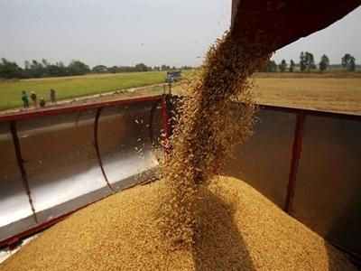 Thái Lan xem xét chương trình trợ giá lúa gạo mới 2014-2015