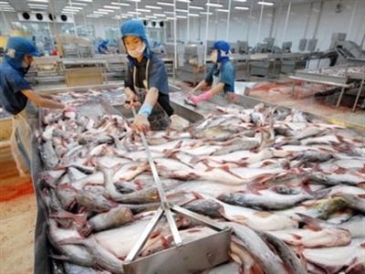 Cá tra - basa Việt Nam tiếp tục bị Mỹ áp thuế chống bán phá giá