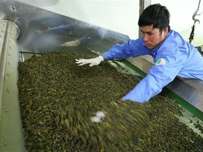 Đài Loan tung tin đồn nông sản Việt Nam nhiễm dioxin