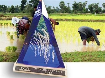 Tổng hợp tin thị trường gạo ngày 21/11