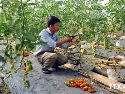 Cần Thơ đầu tư hơn 3.600 tỷ đồng cho nông nghiệp công nghệ cao