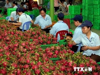 Đưa sản phẩm nông nghiệp Việt Nam vào hệ thống bán lẻ quốc tế