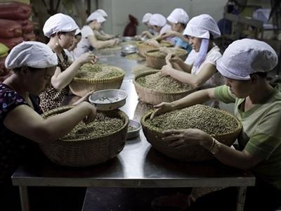 Giá cà phê Tây Nguyên không đổi ở 40,7-41,3 triệu đồng/tấn