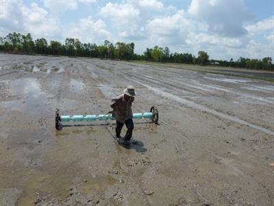 Ngành lúa gạo chưa phát triển bền vững