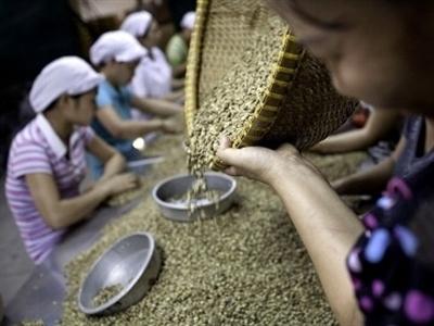 Xuất khẩu cà phê tháng 11 giảm, dấy lên đồn đoán găm hàng