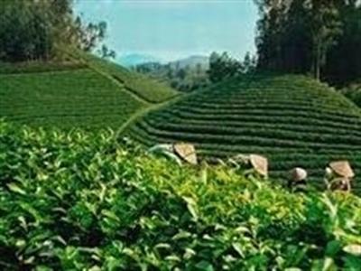 Sắp xếp, đổi mới các công ty nông, lâm nghiệp
