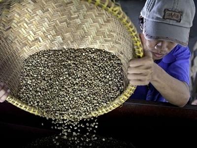 Xuất khẩu cà phê tháng 12/2014 tăng 42,8%