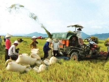 Lúa gạo Việt Nam được gọi là
