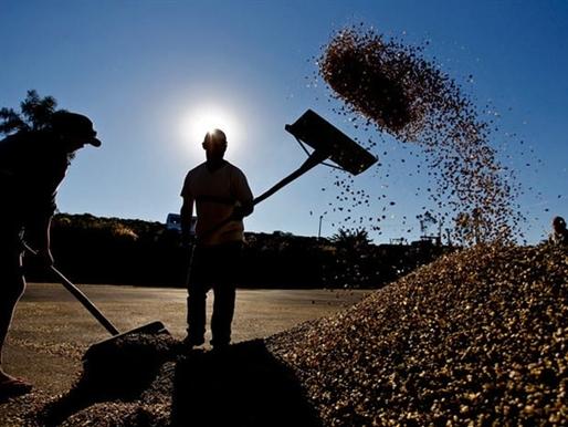 Giới đầu tư rót tiền vào cà phê khi hạn hán đe dọa sản lượng Brazil