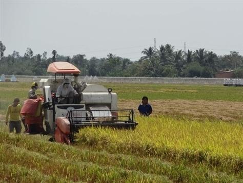 Xuất khẩu gạo khó ngay từ đầu năm